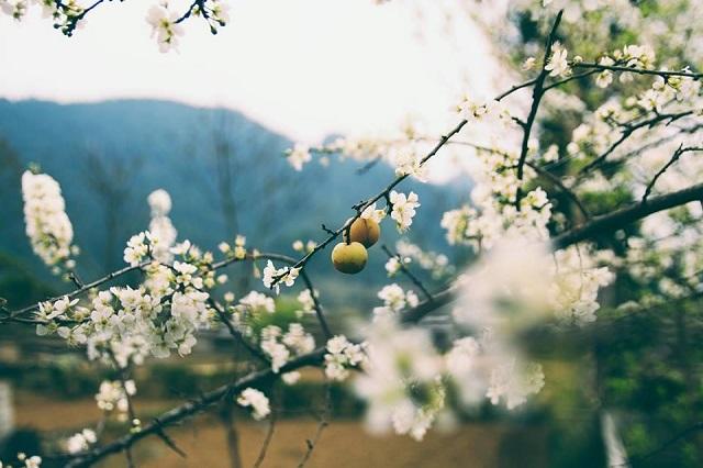 Sapa mùa xuân
