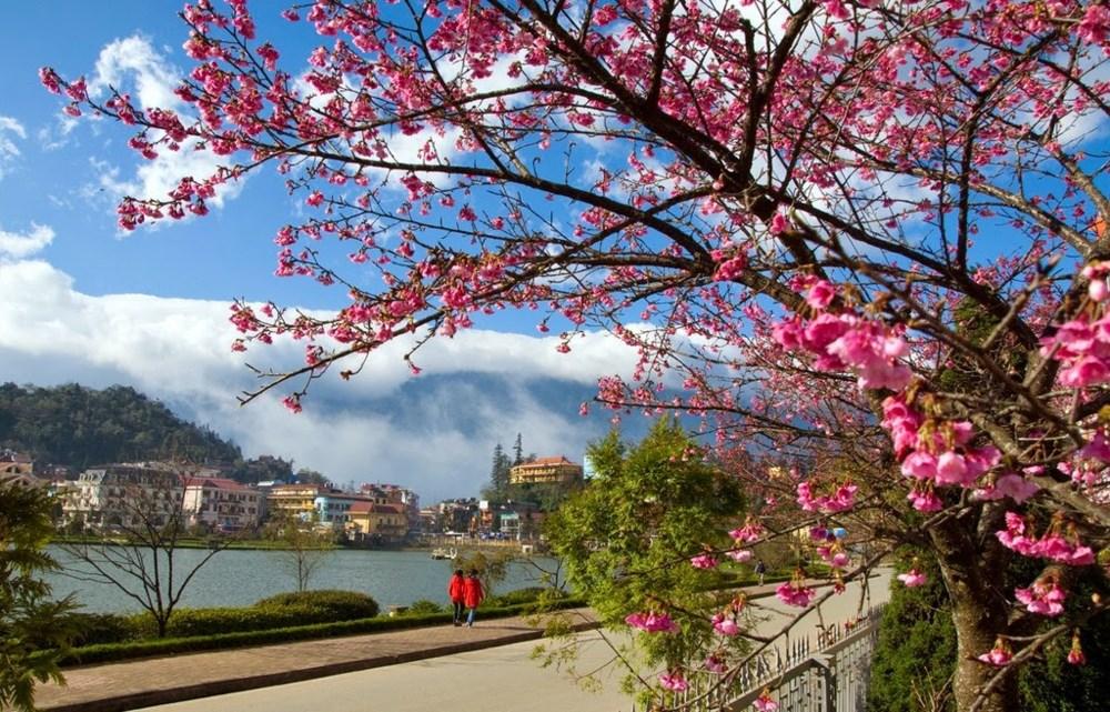 mùa hoa SaPa