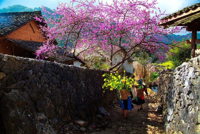 du lịch Sapa mùa nào đẹp nhất